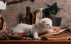 Picture white, leaves, table, wall, Bank, fabric, lies, pot, beads, book, still life, face, ferret, composition, …