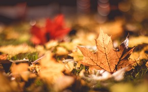 Picture autumn, grass, foliage, bokeh