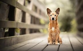 Picture bridge, each, dog