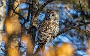 Picture autumn, light, branches, tree, owl, bird, foliage, bokeh, owl