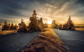 Picture winter, forest, the sky, the sun, clouds, light, snow, sunset, nature, view, beauty, dal, the …