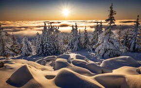 Picture winter, the sun, clouds, rays, snow, trees, landscape, nature, morning, ate, the snow, Robert Didierjean
