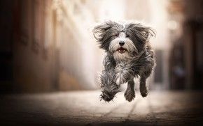 Picture joy, mood, jump, dog, walk, bokeh, shaggy