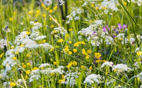 Picture summer, grass, meadow, wildflowers