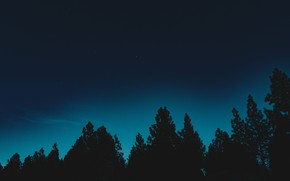 Picture forest, the sky, stars, trees, night, nature