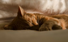 Picture cat, cat, face, sleep, red, sleeping, bed