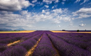 Picture field, summer, the sky, clouds, flowers, blue, hills, France, horizon, space, the ranks, lavender, plantation, …