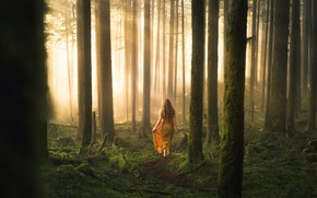 Picture forest, girl, nature
