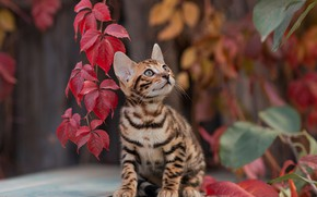 Picture leaves, kitty, Yuriy Korotun