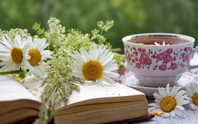 Picture tea, chamomile, mug, book, composition