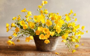 Picture flowers, yellow, pot