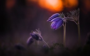 Picture light, flowers, nature, the dark background, spring, lilac, bokeh, cross