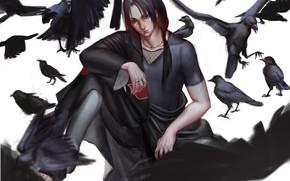 Picture Uchiha Itachi, NARUTO, Black Bird, Genjutsu, Deathpond