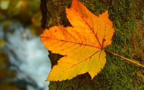 Picture Leaf, Tree, Autumn, Fall, Tree, Autumn, Leave
