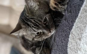 Picture cat, animals, Pets