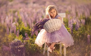 Picture field, summer, flowers, nature, basket, bouquet, cell, chair, girl, baby, child, lupins, Александр Калинин