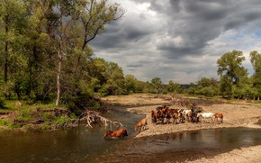 Wallpaper forest, summer, the sky, water, clouds, trees, landscape, clouds, nature, river, branch, shore, heat, horses, ...