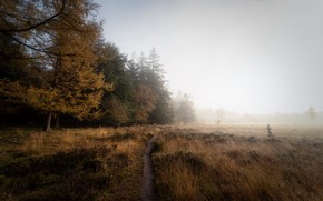 Picture field, autumn, fog