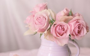 Picture roses, pink, pitcher, still life