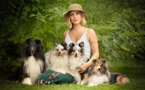 Picture dogs, summer, girl