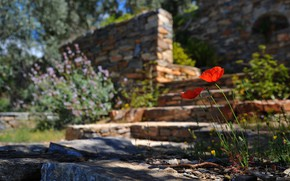 Picture light, flowers, castle, the building, Maki, ladder, red, bricks, bokeh