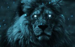 Picture look, face, light, lights, the dark background, rendering, fiction, portrait, Leo, art, mane, snowfall, photoart, …