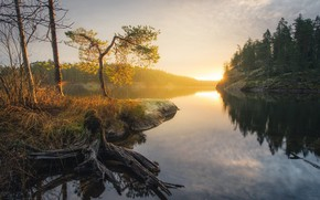 Picture forest, landscape, nature, river, dawn, beauty, morning
