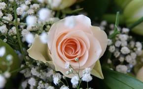 Picture Flower, Rose, Wallpaper, Wedding bouquet
