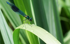 Picture grass, dragonfly, insect