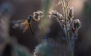 Picture nature, dragonfly, insect