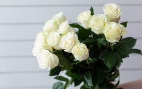 Picture roses, bouquet, white