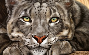 Picture look, face, animal, IRBIS, snow leopard