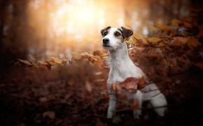 Picture autumn, look, face, leaves, light, branches, nature, pose, Park, foliage, portrait, dog, face, sitting, bokeh, …