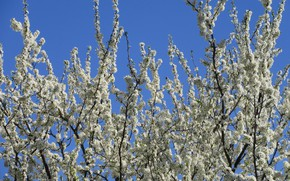 Picture Flowers, Tree, Drain, Meduzanol ©, Spring 2018