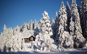 Picture winter, forest, the sky, light, snow, comfort, house, blue, in the snow, view, beauty, tale, …
