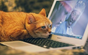Picture cat, computer, cat, look, face, background, movie, the film, red, lies, keyboard, laptop, boredom, unhappy, …