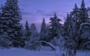 Picture winter, forest, the sky, snow, nature, tree, the evening, Andrey Sharapov