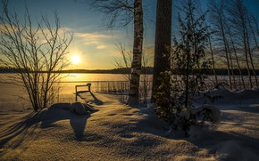Picture winter, snow, sunset, photo, tree, frost