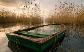 Picture lake, boat, reed