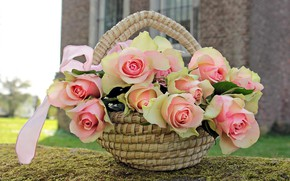 Picture flowers, roses, basket