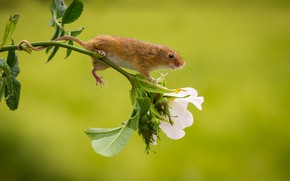 Picture flower, mouse, baby