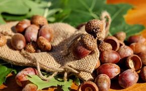 Picture green leaves, acorns, matting