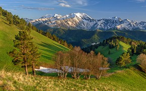 Picture forest, the sun, mountains, hills, Anna Andreeva