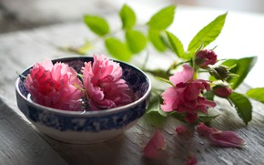 Picture leaves, flowers, table, background, Board, roses, light, blur, petals, Cup, pink, still life, buds, composition, …