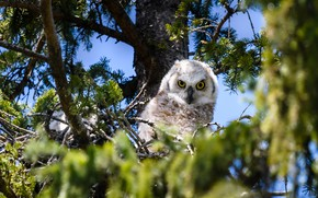 Picture look, branches, tree, owl, bird, foliage, blue background, bokeh