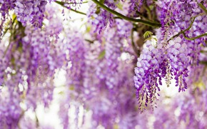Picture flowers, close-up, branches, nature, glare, mood, color, beauty, blur, spring, petals, garden, light background, flowering, …