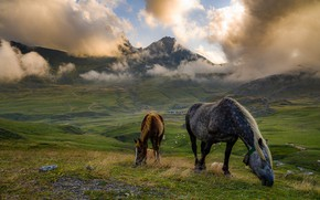 Picture clouds, mountains, fog, horse, horses, horse, pasture, foal, grazing