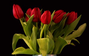 Picture flowers, bouquet, tulips, red, black background, buds