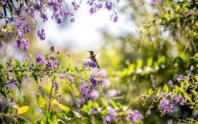 Picture summer, bird, Hummingbird