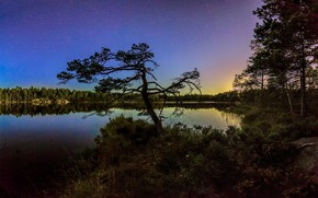 Picture landscape, night, nature, lake, tree, beauty